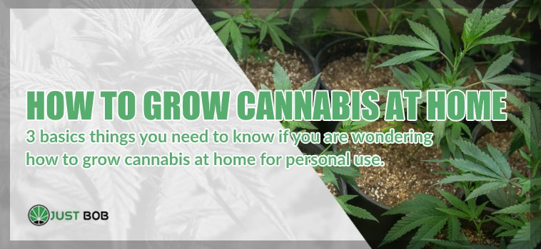 How to grow legal cannabis at home