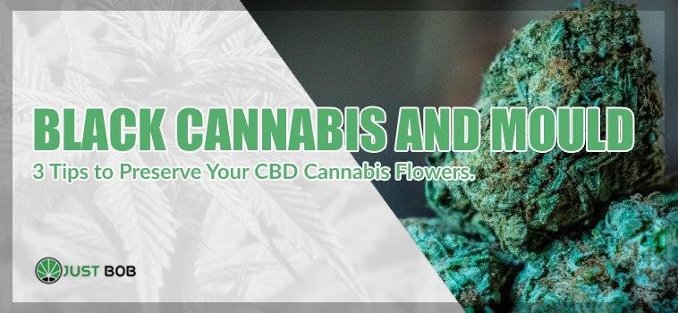 black marijuana and mold