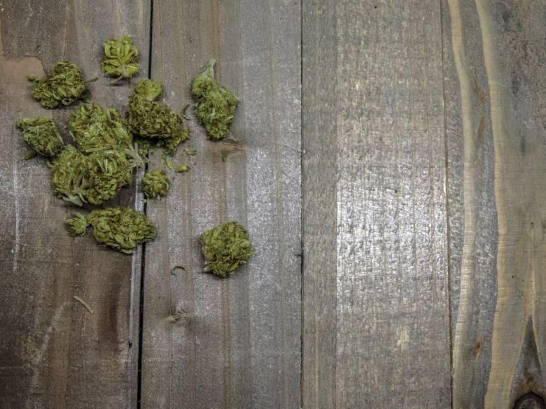 buds of sativa cannabis