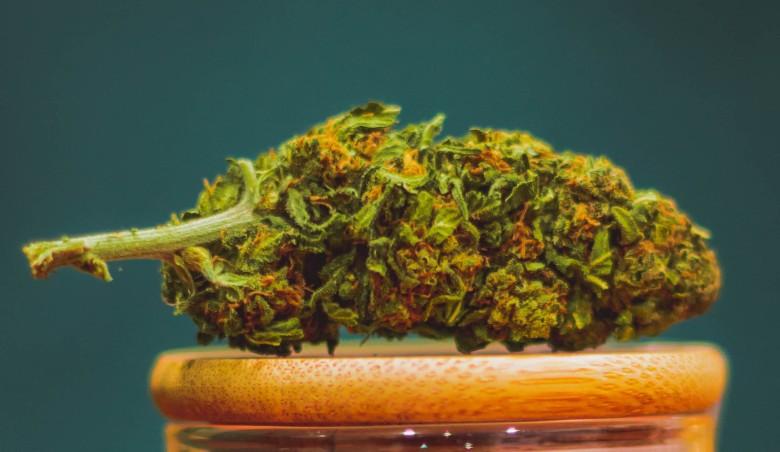 california haze legal cannabis cbd