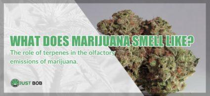 cbd marijuana smell like
