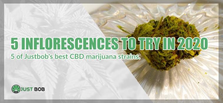marijuana cbd strains