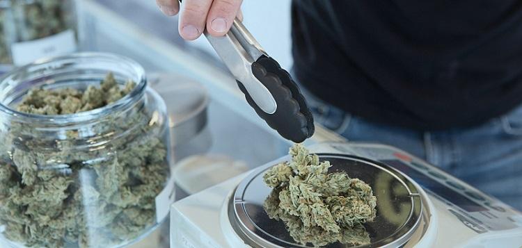 The cbd cannabis is legal