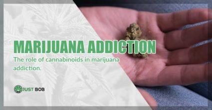 marijuana cbd is not addictive