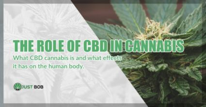 the role of CBD in legal cannabis