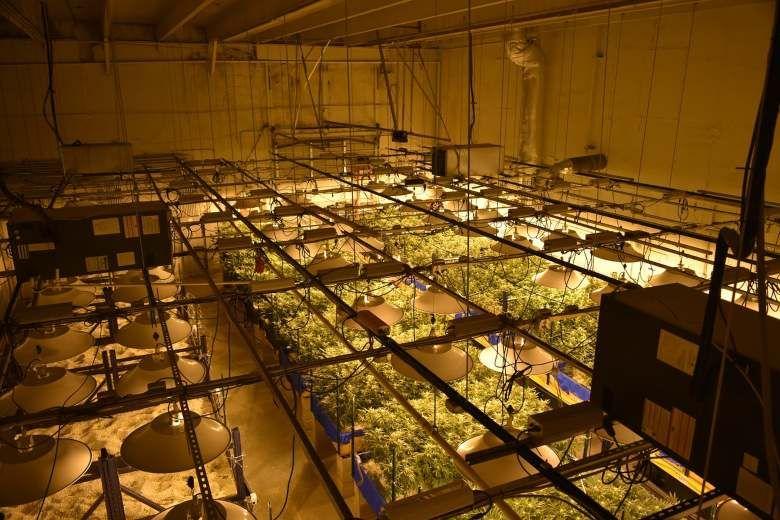CBD cannabis for technical use