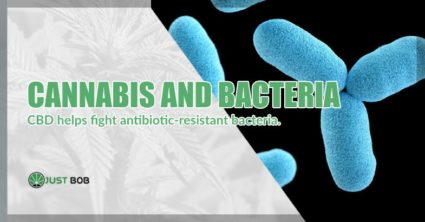 Cannabis and bacteria