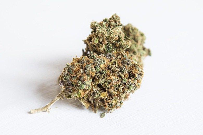 CBD weed indoor vs marijuana Outdoor