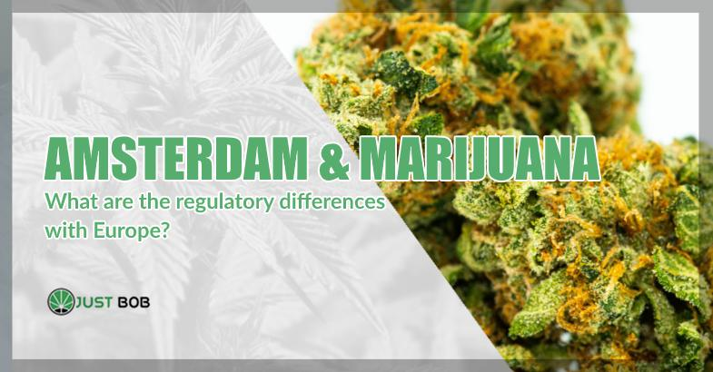Amsterdam & marijuana differences with europe