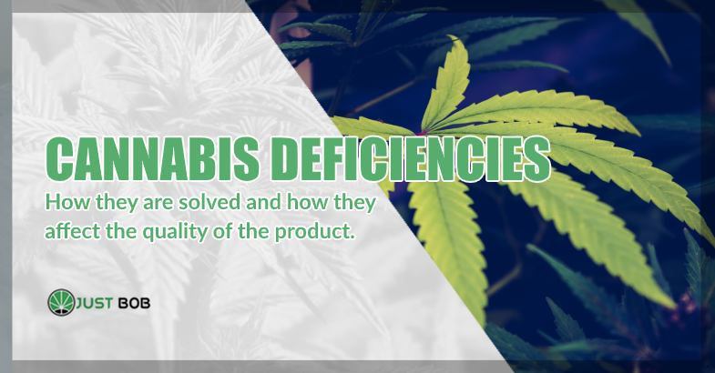 CBD Cannabis deficiencies how they are solved