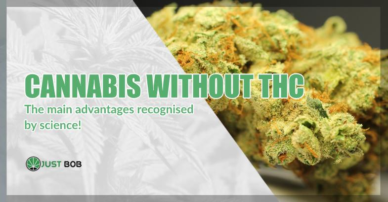 Cannabis without THC advantages