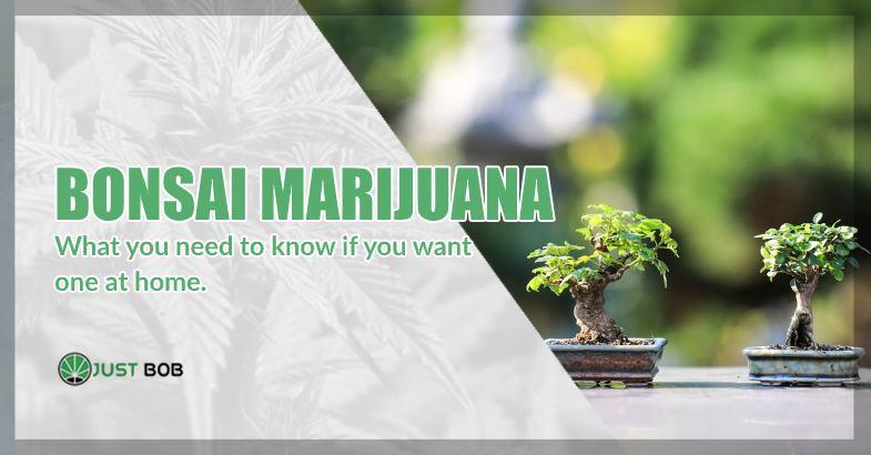 Grow a bonsai marijuana