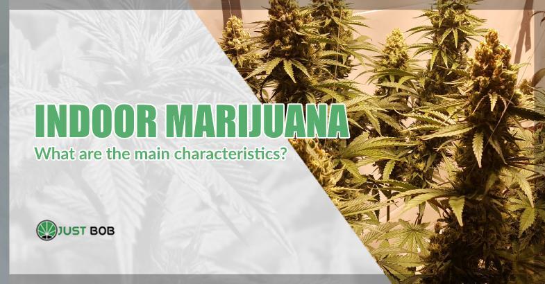 characteristics of indoor marijuana