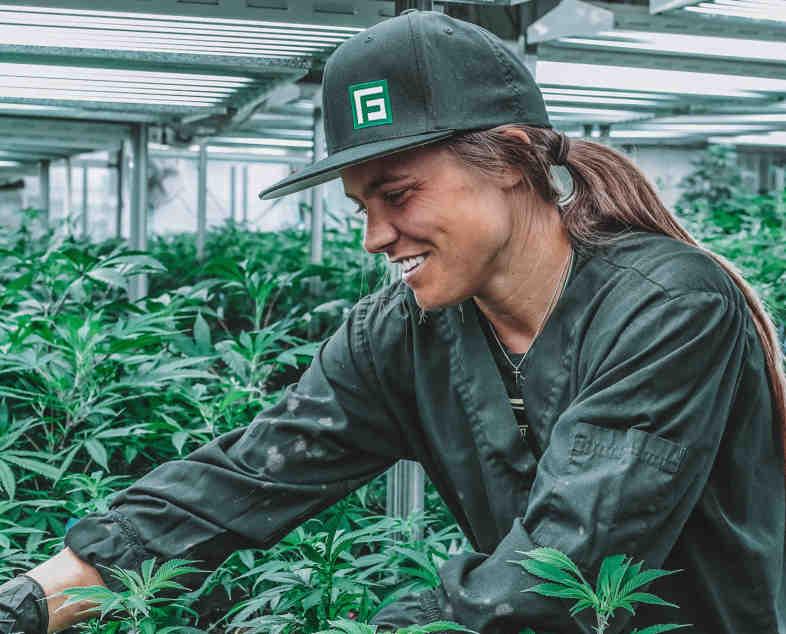Cannabis grower in Uruguay