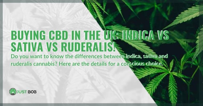 Choosing which CBD cannabis to buy in the UK, between indica, sativa and ruderalis