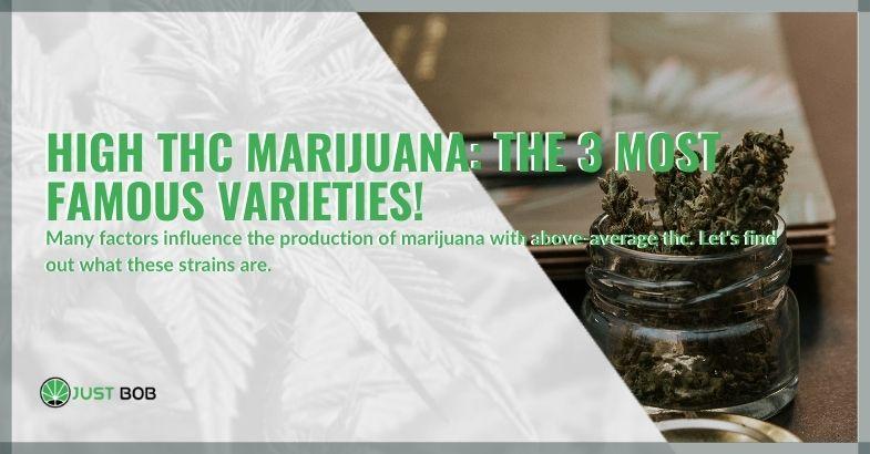 High THC marijuana: the 3 most famous varieties!