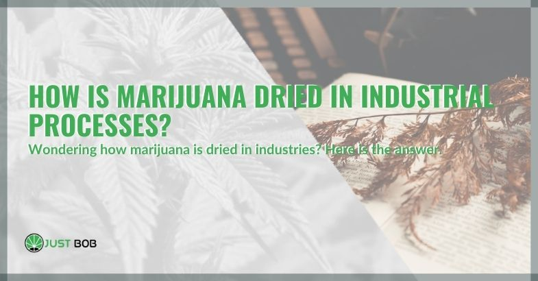 How is marijuana dried in industrial processes?
