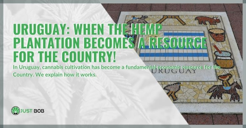 Uruguay: when the hemp plantation becomes a resource for the country!