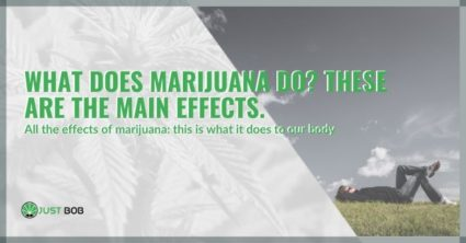 What does marijuana do? These are the main effects.