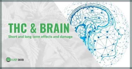 THC & brain: short and long term effects and damage