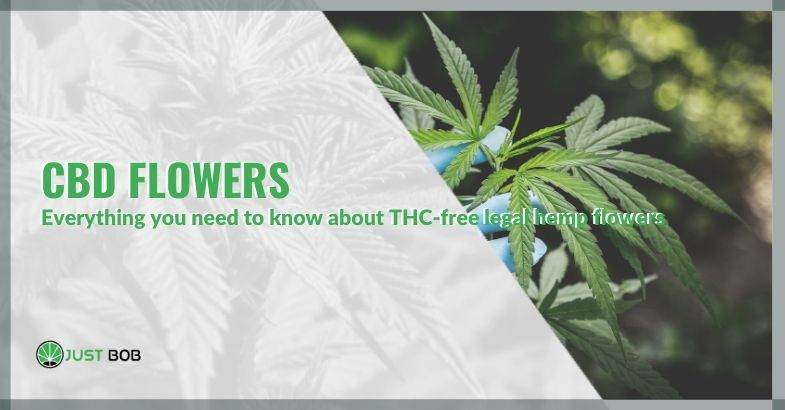CBD flowers: everything you need to know about THC-free legal hemp flowers