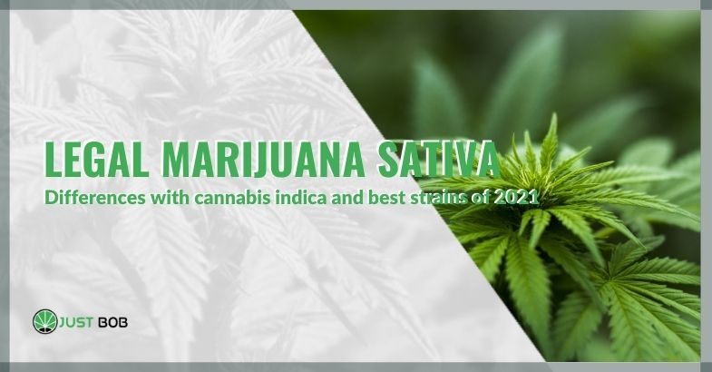 Legal marijuana Sativa: differences with cannabis indica and best strains of 2021