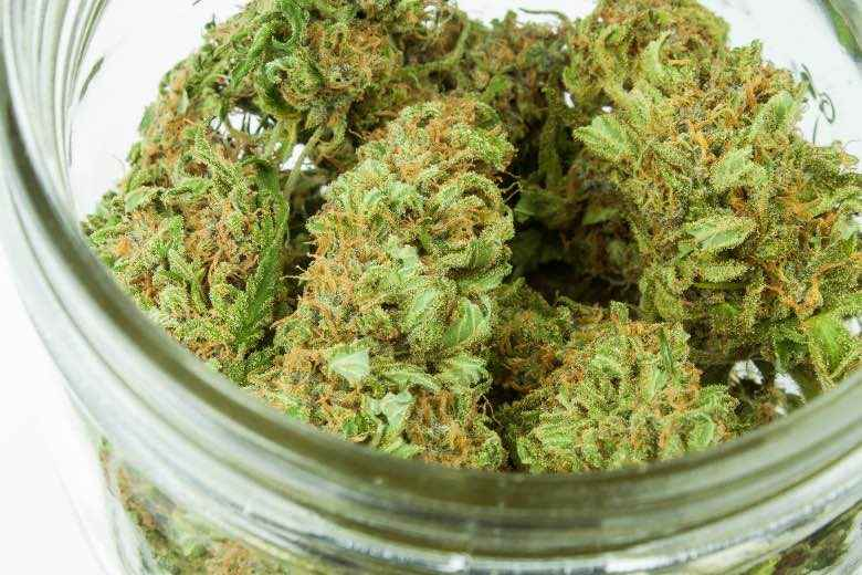 Cannabis flos or dried medical marijuana flowers