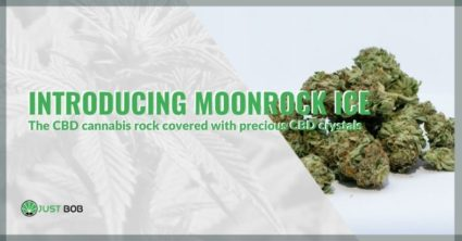 Introducing Moonrock Ice, the CBD cannabis rock covered with precious CBD crystals