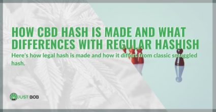 How CBD hash is made and what differences with regular hashish