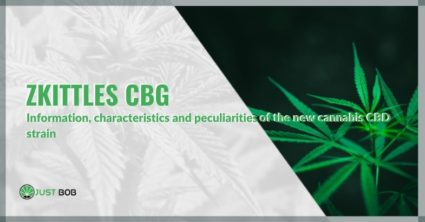 Zkittles CBG: information, characteristics and peculiarities of the new cannabis CBD strain