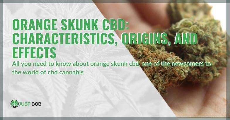 Characteristics, origins and effects of Orange Skunk CBD