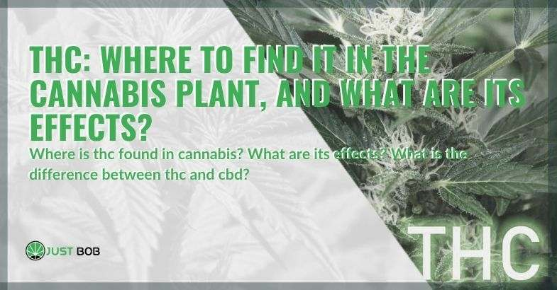 Where is THC found in the cannabis plant?