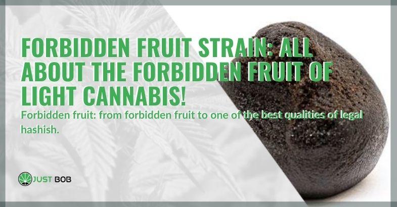 All about legal cannabis Forbidden fruit
