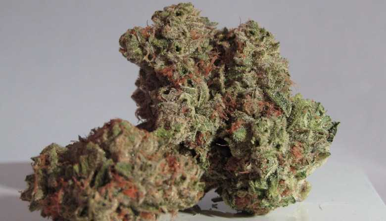 Cannabis with a high CBN content