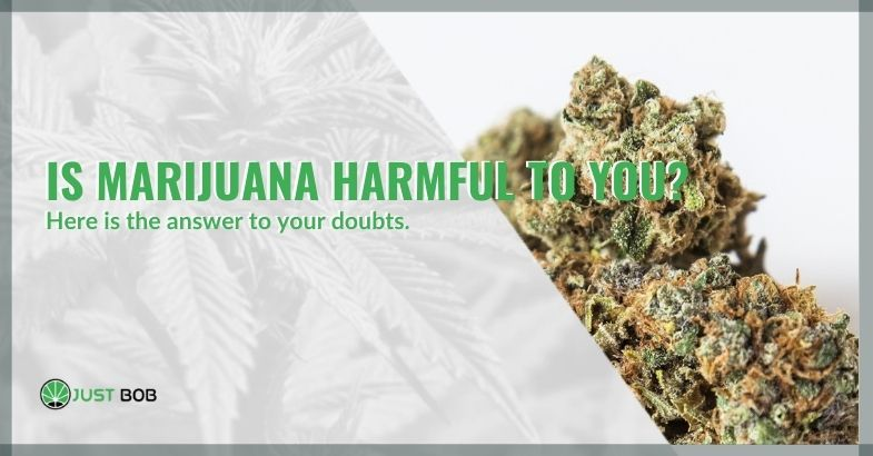 Is marijuana harmful to you? Here is the answer to your doubts.