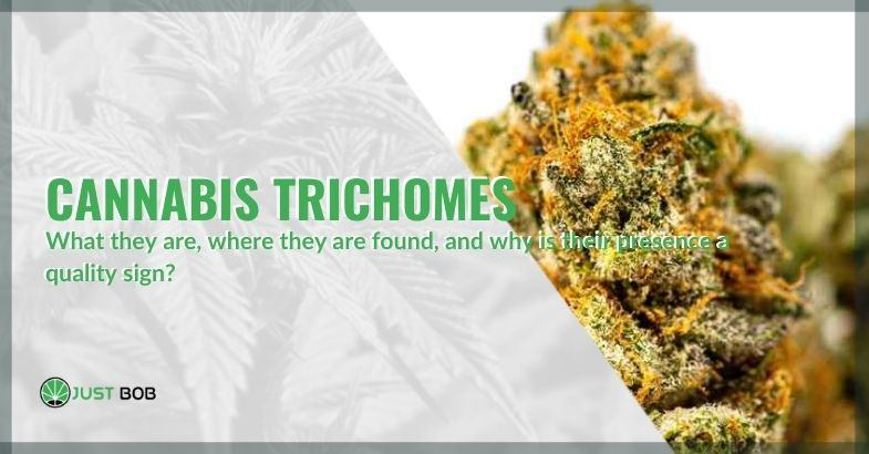 What are cannabis trichomes and why are they a sign of quality?
