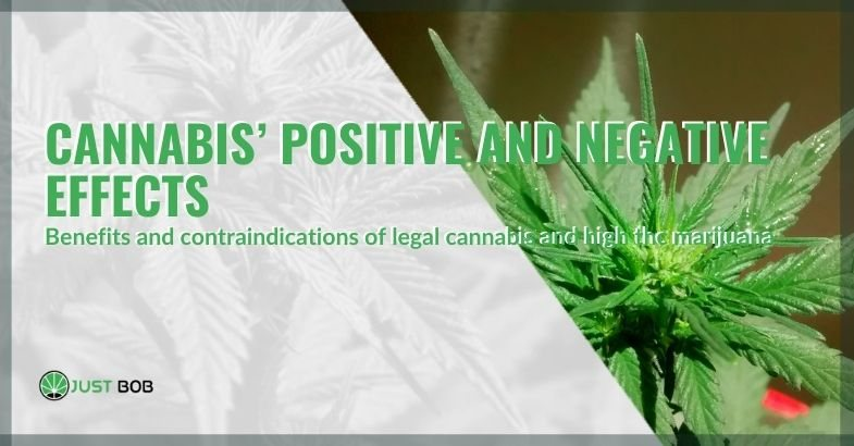 The positive and negative effects of cannabis