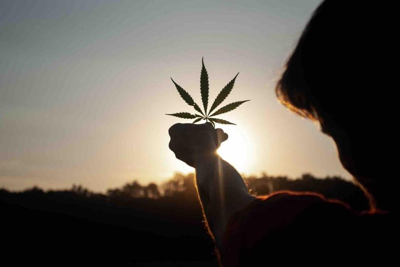 The differences between light cannabis effects and illegal cannabis