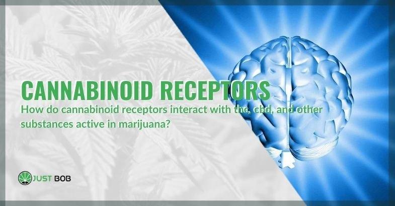 The mechanism of action of cannabinoid receptors