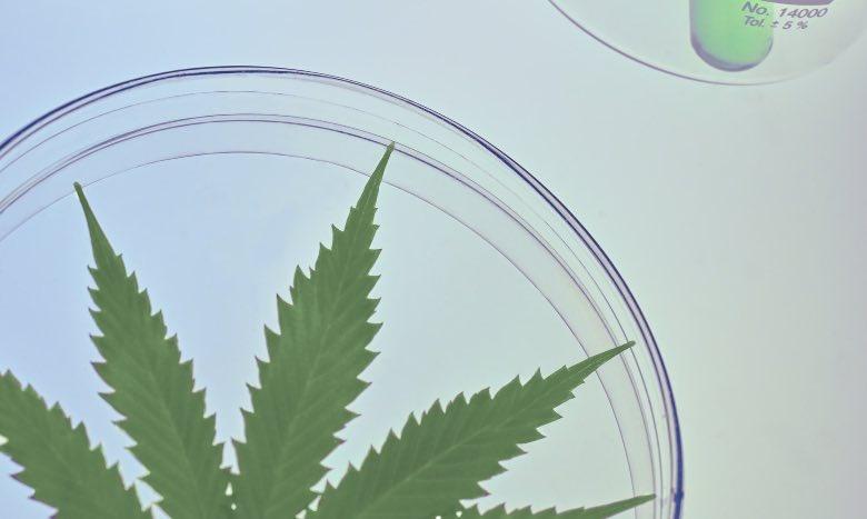 Test tube studies and tests on light hemp