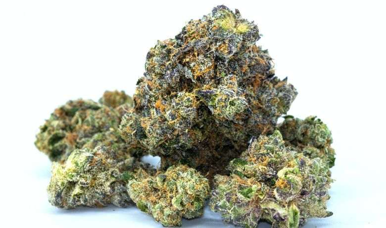 CBD cannabis online at Justbob