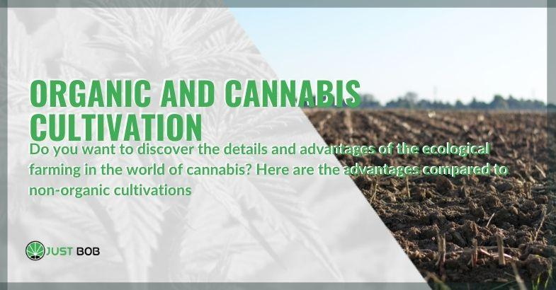 The benefits and characteristics of organic farming in cannabis