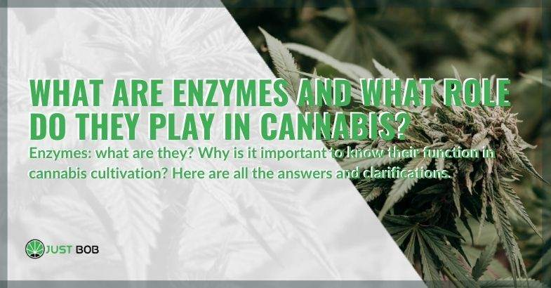 What are enzymes in marijuana, and what are they used for?
