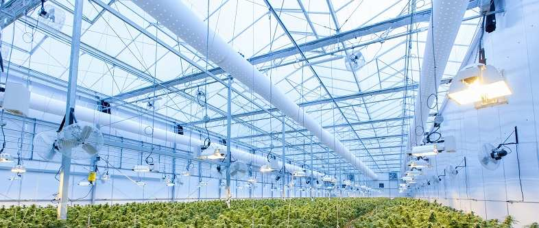 The greenhouse is a perfect environment for aeroponic cultivation
