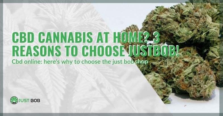 Buying legal marijuana at home: why choose Justbob