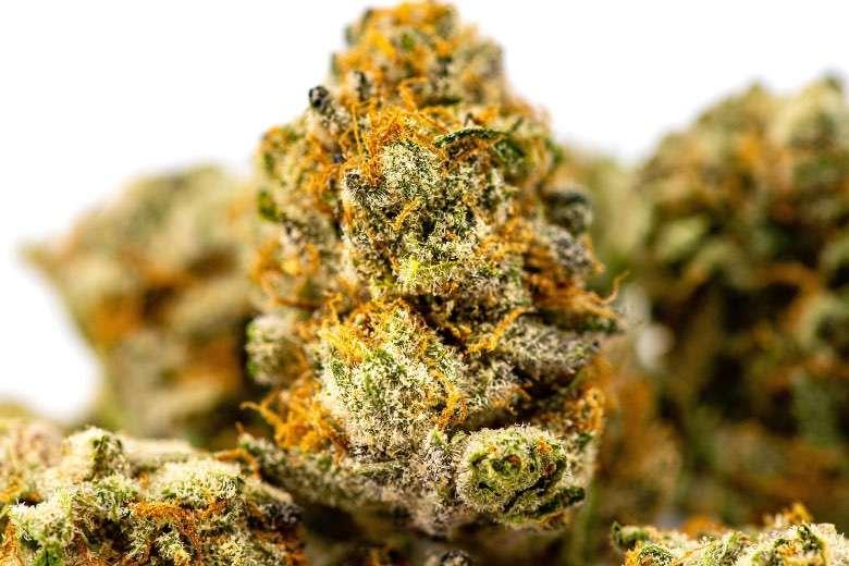 The best quality marijuana at Justbob