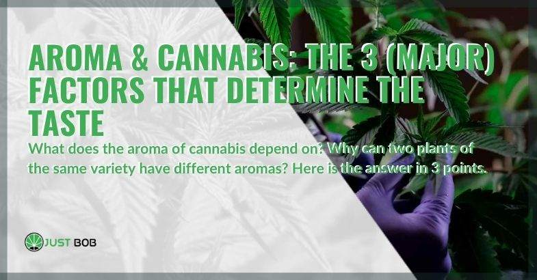 The aroma of cannabis is determined by 3 main factors