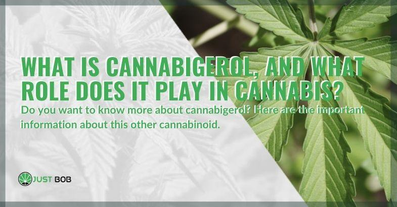 What is cannabigerol and what is its role in cannabis