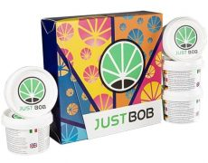 kit Back2Work Silver with 5 genetics of CBD weed