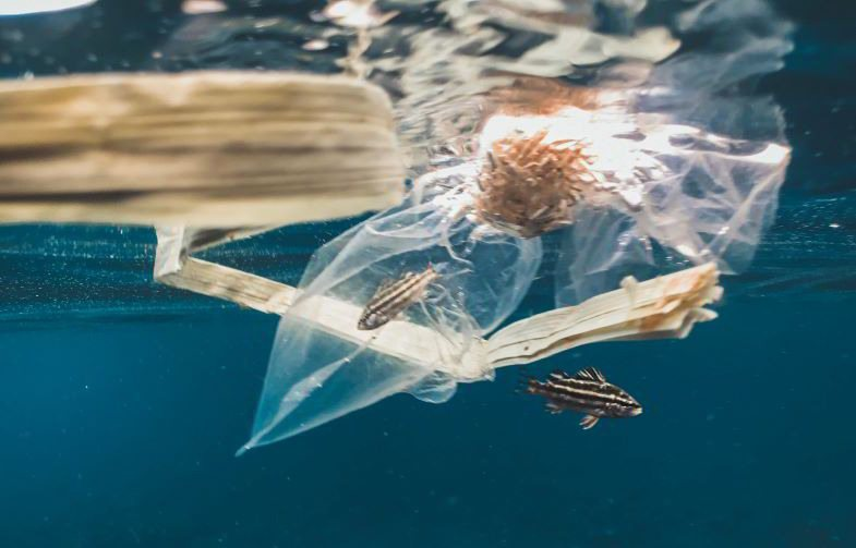 Chemical plastic that pollutes the environment, to be replaced with that of hemp